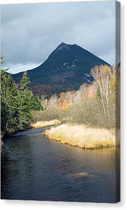 The Sentinel Canvas Print by Gregory  Dawes