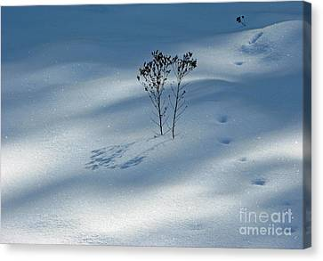 Canvas Print featuring the photograph The Shadow Of Loneliness by Ausra Huntington nee Paulauskaite