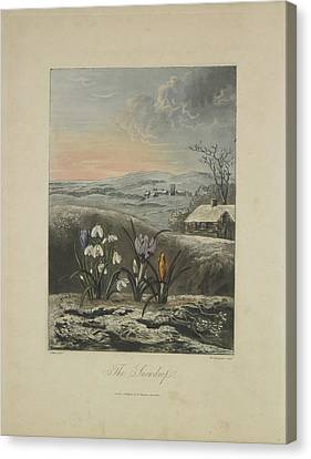 The Snowdrop Canvas Print by Robert John Thornton