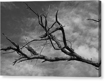 The Spectre Of Drought Canvas Print