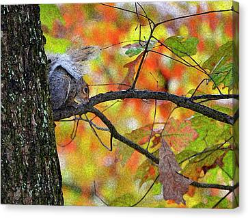 The Squirrel Umbrella Canvas Print by Paul Mashburn