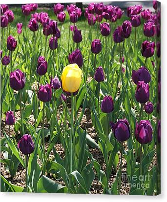 Canvas Print featuring the photograph The Stand Out by Julie Clements