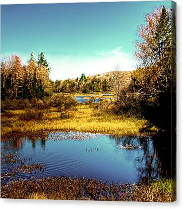Fir Trees Canvas Print - The Still Of Autumn In The Adirondacks by David Patterson