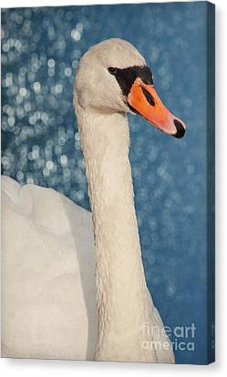 The Swan Canvas Print by Angela Doelling AD DESIGN Photo and PhotoArt