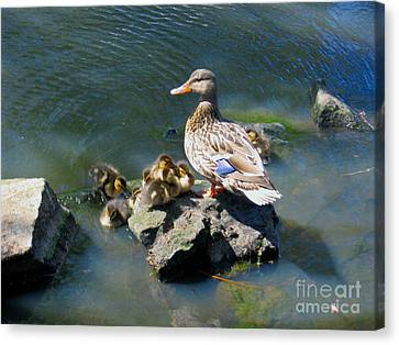 Canvas Print featuring the photograph The Swimming Lesson by Rory Sagner