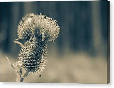 The Thistle Canvas Print by Andreas Levi