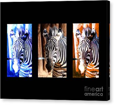 Canvas Print featuring the photograph The Three Zebras Black Borders by Rebecca Margraf