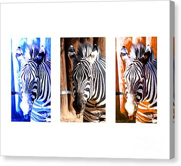 Canvas Print featuring the photograph The Three Zebras White Borders by Rebecca Margraf