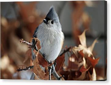 Canvas Print featuring the photograph The Titmouse by Mike Martin