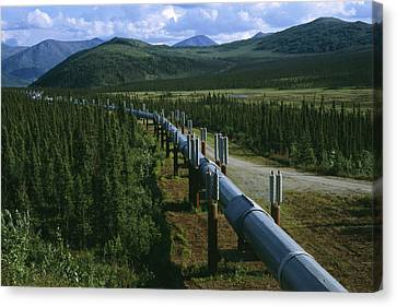 The Trans-alaska Pipeline Runs Canvas Print by Melissa Farlow