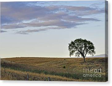 The Tree 2 Canvas Print
