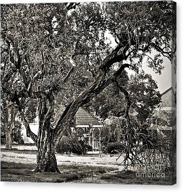 The Tree Which Moves ... Canvas Print by Gwyn Newcombe