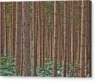 The Trees Canvas Print by David Wynia