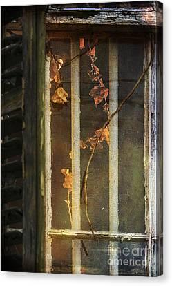 The Vine Inside Canvas Print by Sari Sauls