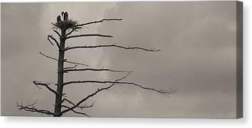 The Vulture Tree Canvas Print by Artist Orange