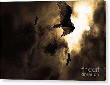 The Vultures Have Gathered In My Dreams . Version 2 . Golden Canvas Print by Wingsdomain Art and Photography
