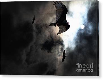 The Vultures Have Gathered In My Dreams . Version 2 Canvas Print by Wingsdomain Art and Photography