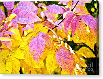 The Warm Glow In Autumn Abstract Canvas Print by Andee Design
