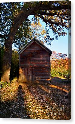The Weathered Shed Canvas Print by Sue Stefanowicz