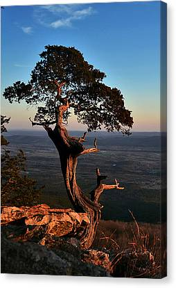 The Weathered Watcher Canvas Print by Jeff Rose