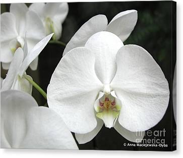 The Whiter Shade Of... Canvas Print