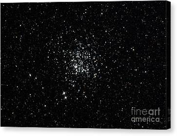 The Wild Duck Cluster Canvas Print by Rolf Geissinger