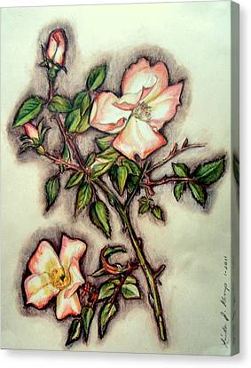 The Wild Rose Canvas Print by Linda Nielsen