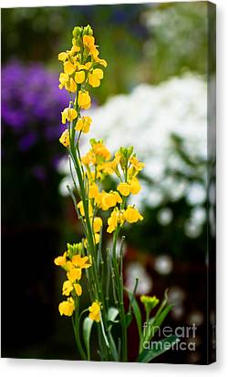 The Yellow Delight Canvas Print