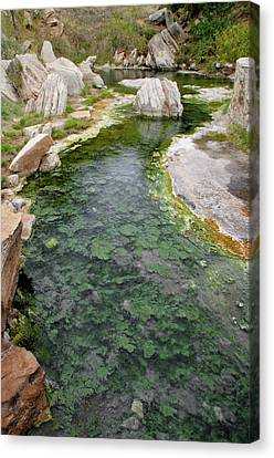 Canvas Print featuring the photograph Thermopolis Hot Springs by Geraldine Alexander