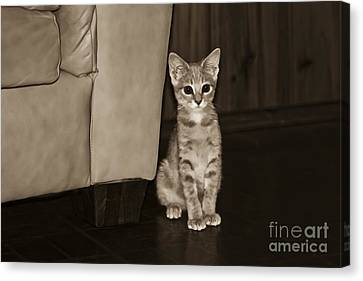 They Got Me Because I'm Cute Canvas Print by Kim Henderson
