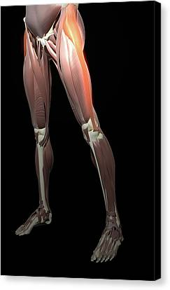 Thigh/lower Limb Abduction Canvas Print by MedicalRF.com