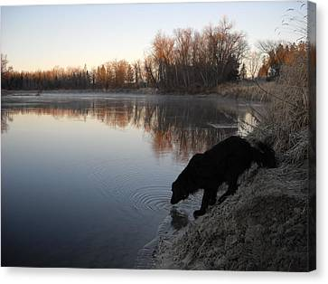 Thirsty In November Canvas Print by Kent Lorentzen