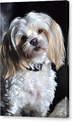 This Guy's My Best Friend Canvas Print by Lisa  DiFruscio