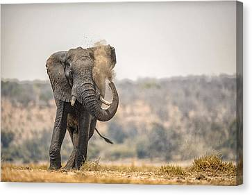 This Is Botswana No.  8 - Feels So Good Canvas Print by Paul W Sharpe Aka Wizard of Wonders