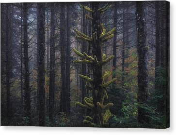 This Is British Columbia No.54 - Misty Mystical Moss Forest II Canvas Print by Paul W Sharpe Aka Wizard of Wonders