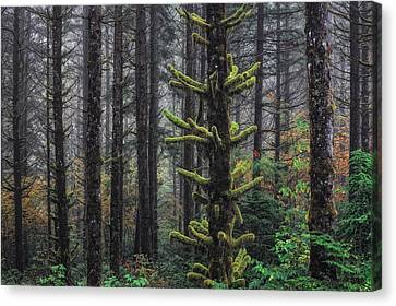 This Is British Columbia No.54f - Misty Mystical Moss Forest IIi Canvas Print by Paul W Sharpe Aka Wizard of Wonders