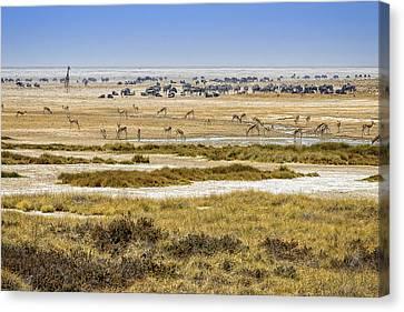 This Is Namibia No.  1 - Waterhole At Etosha Pan Canvas Print by Paul W Sharpe Aka Wizard of Wonders