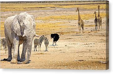 This Is Namibia No. 10 - Etosha White African Elephant  Canvas Print by Paul W Sharpe Aka Wizard of Wonders