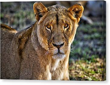 This Is Namibia No. 11 - Just Stare Canvas Print by Paul W Sharpe Aka Wizard of Wonders