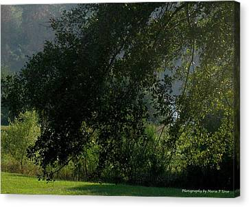 Canvas Print featuring the photograph This Ole Tree by Maria Urso