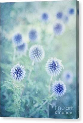 Thistle Canvas Print - Thistle Dreams by Priska Wettstein