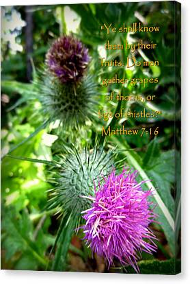 Thistle Matthew 7 Canvas Print by Cindy Wright