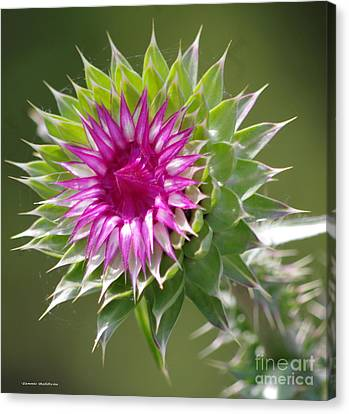Thistle  Canvas Print by Tannis  Baldwin