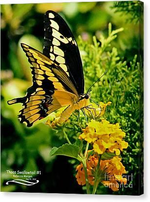 Thoas Swallowtail #1 Canvas Print by Rebecca Morgan
