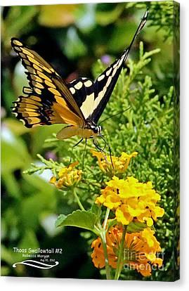Thoas Swallowtail #2 Canvas Print by Rebecca Morgan