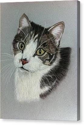 Thomas A Pastel Portrait Canvas Print by Hillary Rose