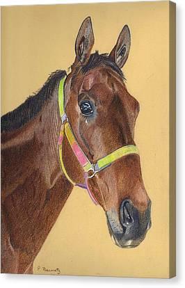 Thoroughbred Canvas Print by Patricia Barmatz