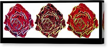 three colors of roses I Canvas Print by Branko Jovanovic