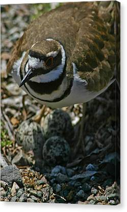 Canvas Print featuring the photograph Three Eggs. by Mitch Shindelbower
