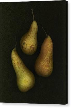 Three Golden Pears Canvas Print by Deddeda